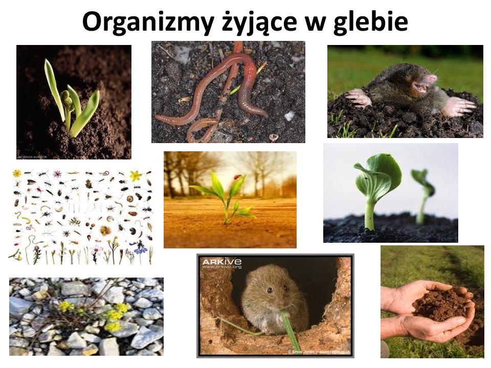 Organizmy żyjące w glebie