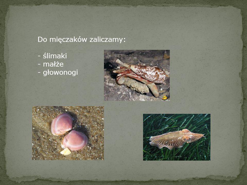 Mięczaki żyją: - na lądzie, w miejscach wilgotnych i zacienionych - w wodach słodkich - w wodach słonych