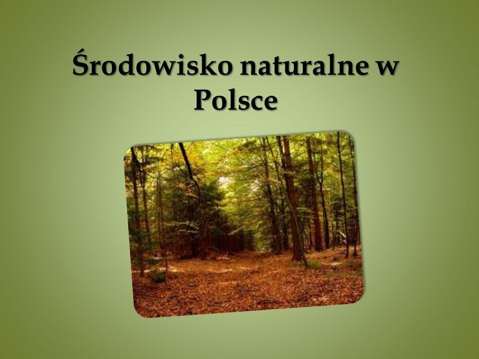 Środowisko naturalne w Polsce