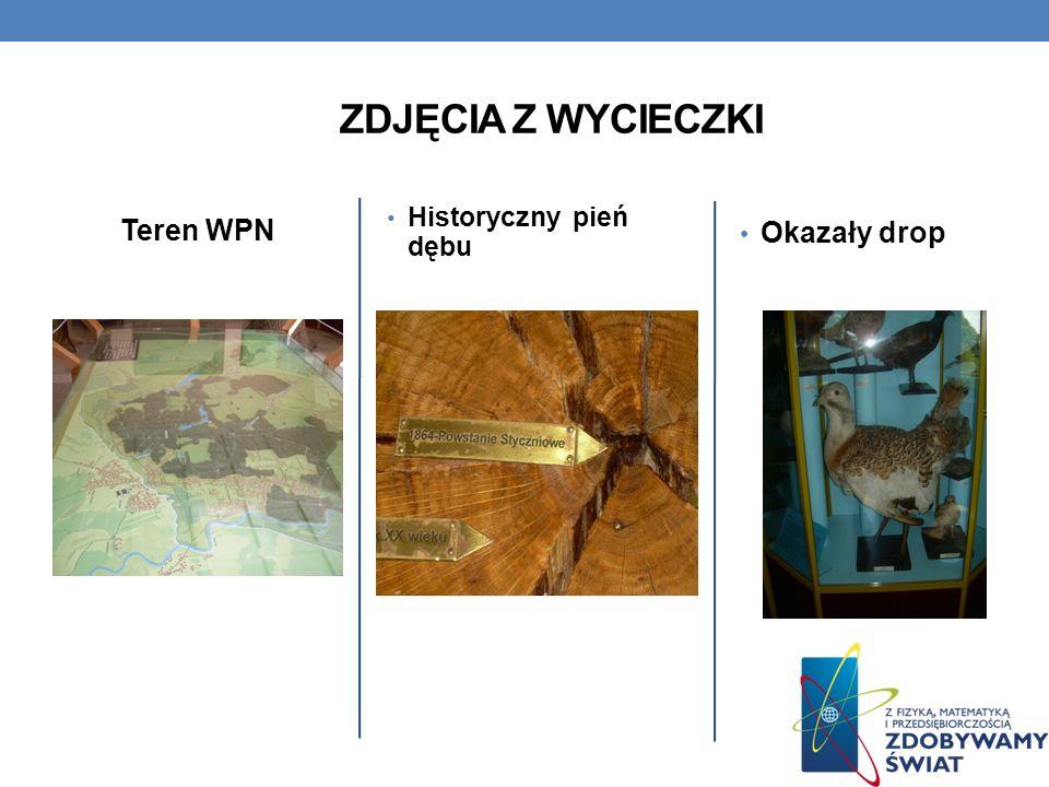 Teren WPN Historyczny pień dębu Okazały drop ZDJĘCIA Z WYCIECZKI