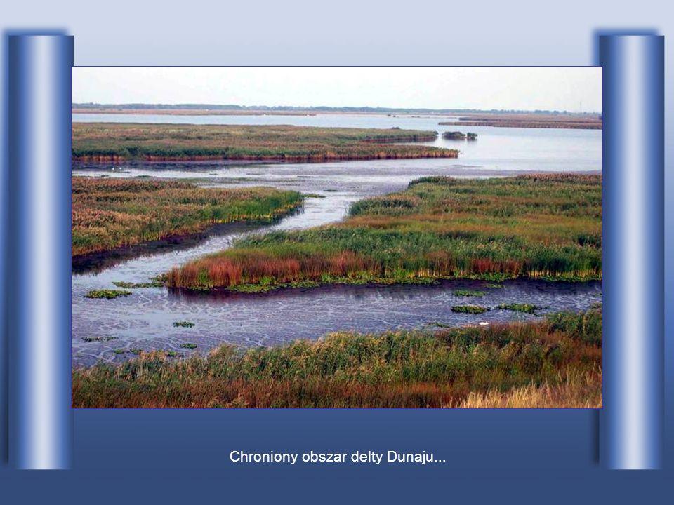 ...po czym rozlewa się w rozległą deltę.