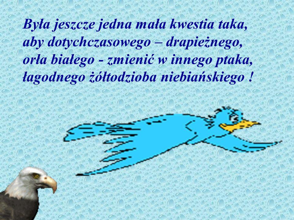 Była jeszcze jedna mała kwestia taka, aby dotychczasowego – drapieżnego, orła białego - zmienić w innego ptaka, łagodnego żółtodzioba niebiańskiego !