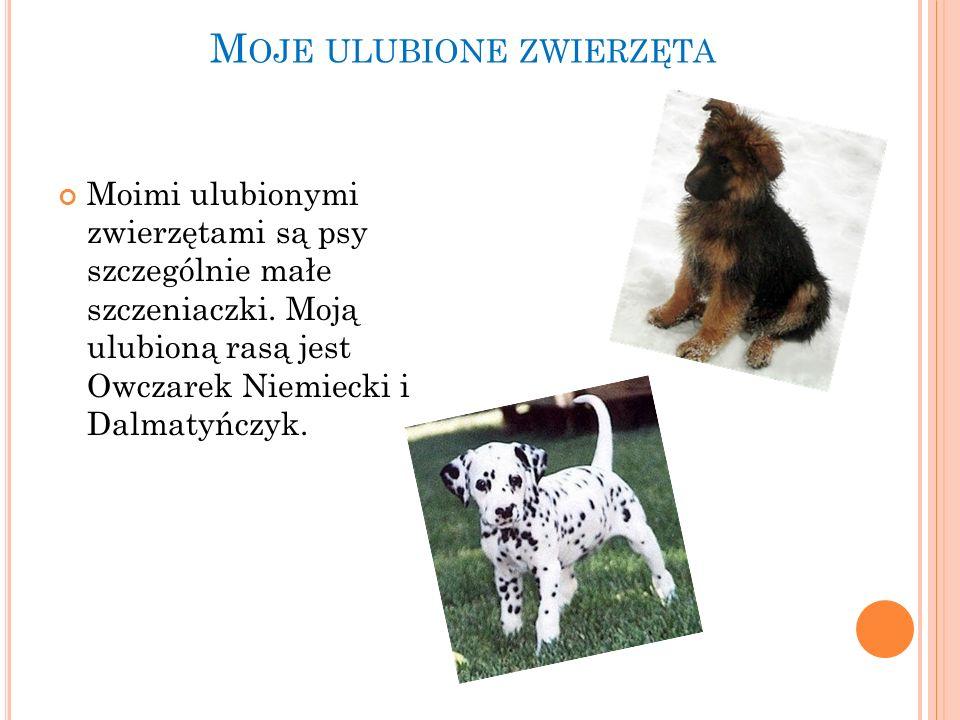 M OJE ULUBIONE ZWIERZĘTA Moimi ulubionymi zwierzętami są psy szczególnie małe szczeniaczki. Moją ulubioną rasą jest Owczarek Niemiecki i Dalmatyńczyk.