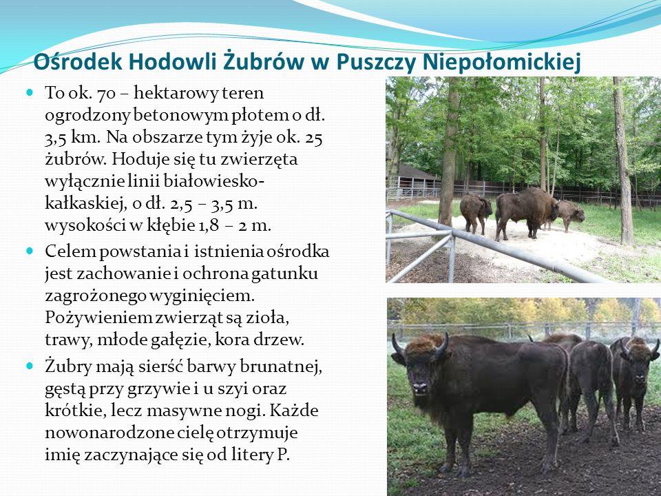 Ośrodek Hodowli Żubrów w Puszczy Niepołomickiej To ok.