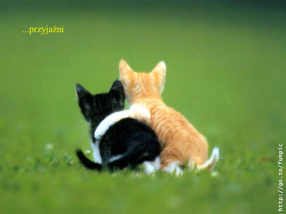 ...przyjaźni