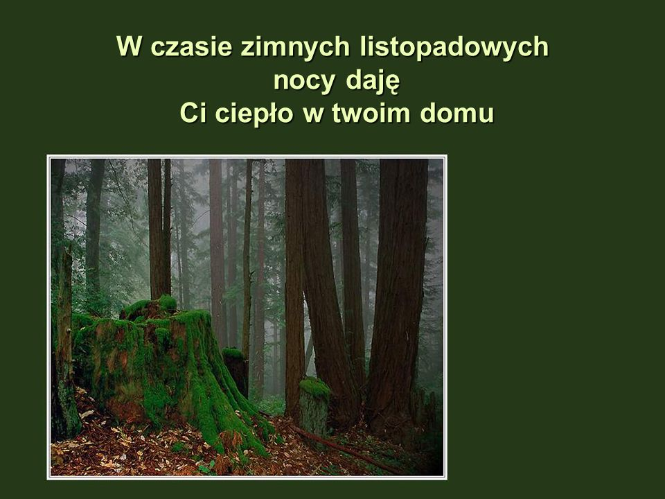 Jako Las jestem miejscem Waszych ulubionych baśni i legend …