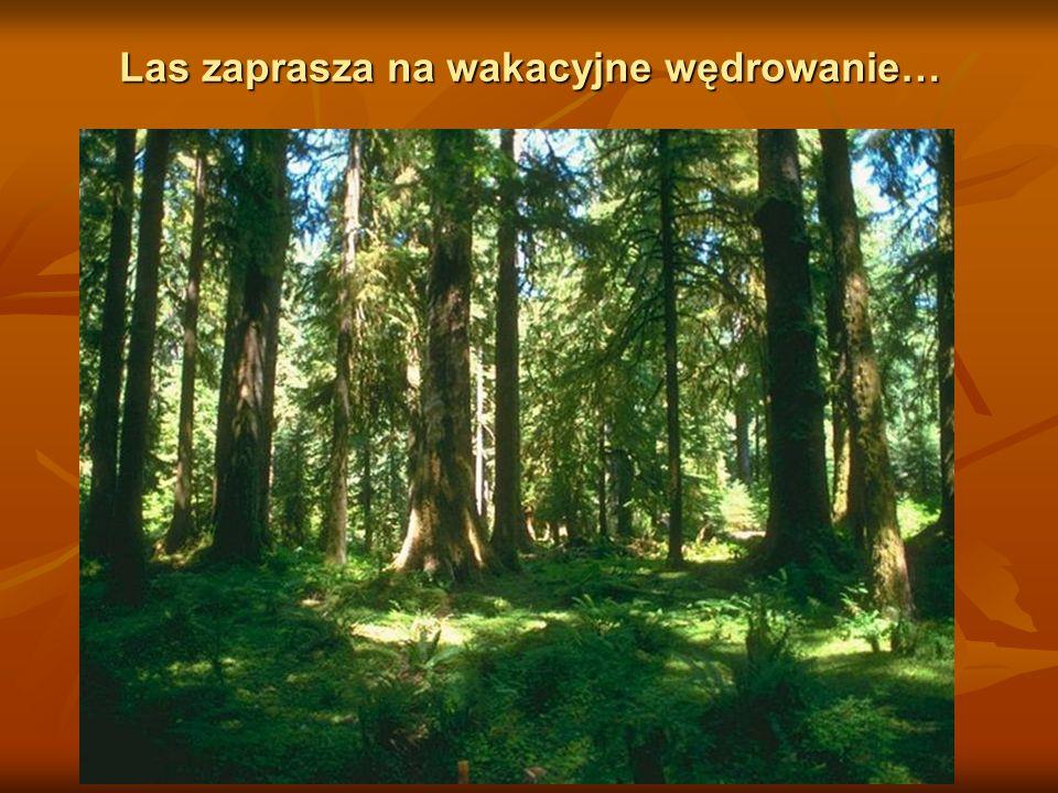 Latem w lasach jest naj - weselej