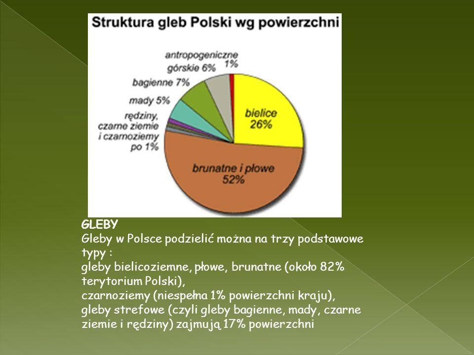 GLEBY Gleby w Polsce podzielić można na trzy podstawowe typy : gleby bielicoziemne, płowe, brunatne (około 82% terytorium Polski), czarnoziemy (niespe