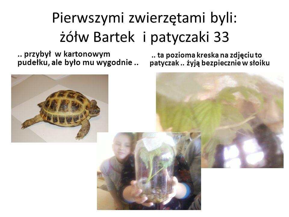 Pierwszymi zwierzętami byli: żółw Bartek i patyczaki 33..