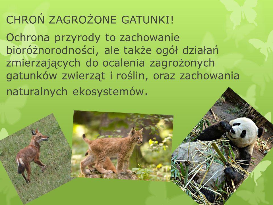 CHROŃ ZAGROŻONE GATUNKI! Ochrona przyrody to zachowanie bioróżnorodności, ale także ogół działań zmierzających do ocalenia zagrożonych gatunków zwierz
