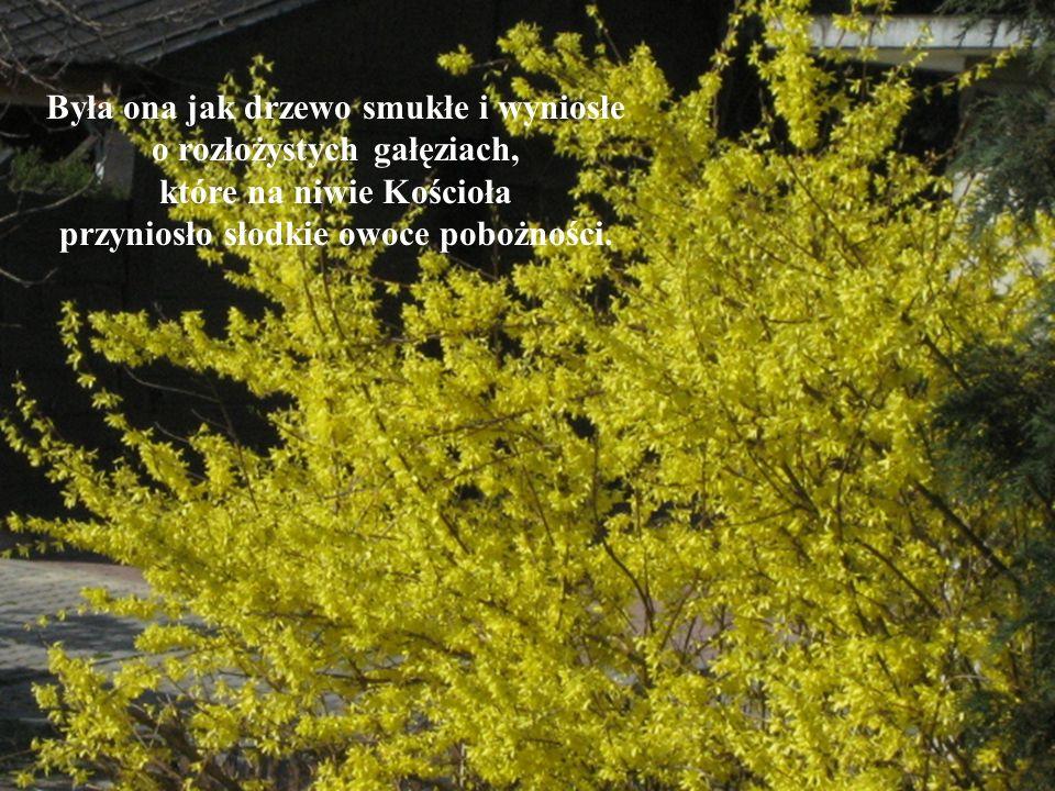 Była ona jak drzewo smukłe i wyniosłe o rozłożystych gałęziach, które na niwie Kościoła przyniosło słodkie owoce pobożności.