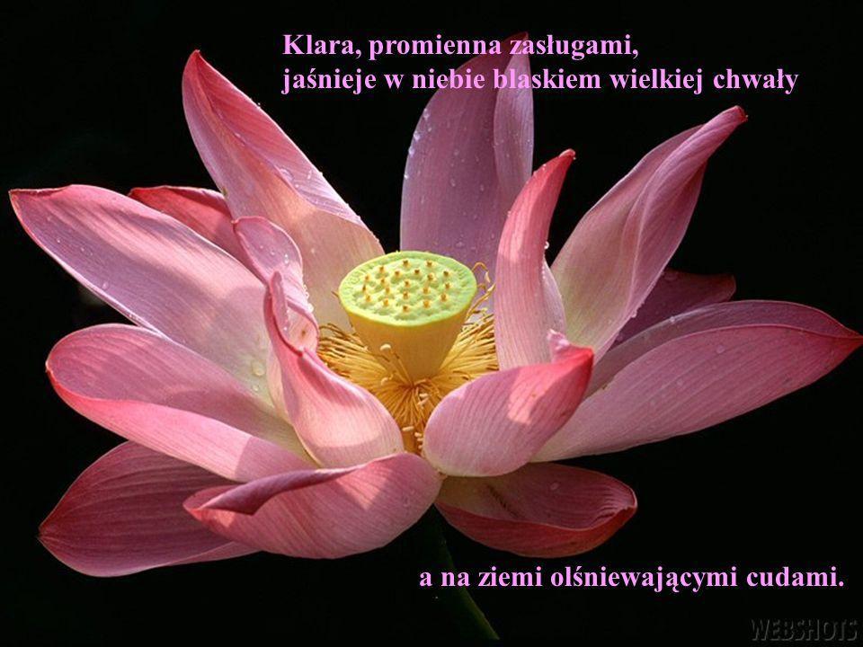 Klara, promienna zasługami, jaśnieje w niebie blaskiem wielkiej chwały a na ziemi olśniewającymi cudami.