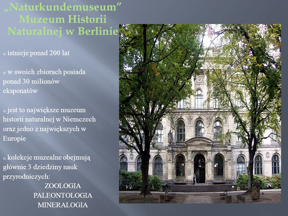 Naturkundemuseum Muzeum Historii Naturalnej w Berlinie o istnieje ponad 200 lat o w swoich zbiorach posiada ponad 30 milionów eksponatów o jest to największe muzeum historii naturalnej w Niemczech oraz jedno z największych w Europie o kolekcje muzealne obejmują głównie 3 dziedziny nauk przyrodniczych: ZOOLOGIA PALEONTOLOGIA MINERALOGIA