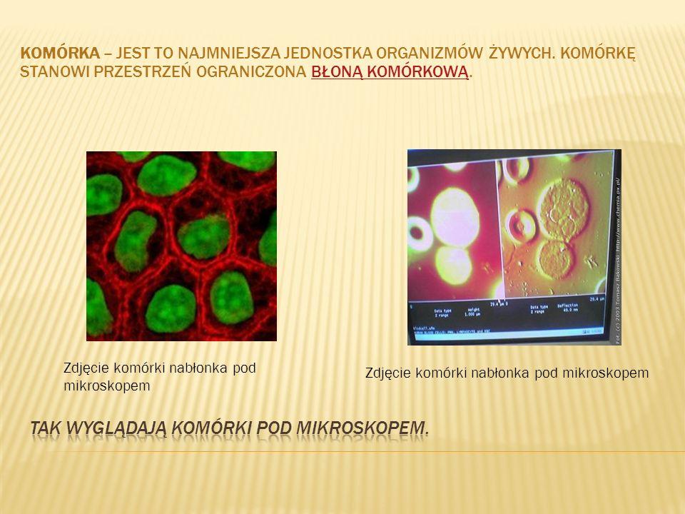 KOMÓRKA – JEST TO NAJMNIEJSZA JEDNOSTKA ORGANIZMÓW ŻYWYCH. KOMÓRKĘ STANOWI PRZESTRZEŃ OGRANICZONA BŁONĄ KOMÓRKOWĄ.BŁONĄ KOMÓRKOWĄ Zdjęcie komórki nabł