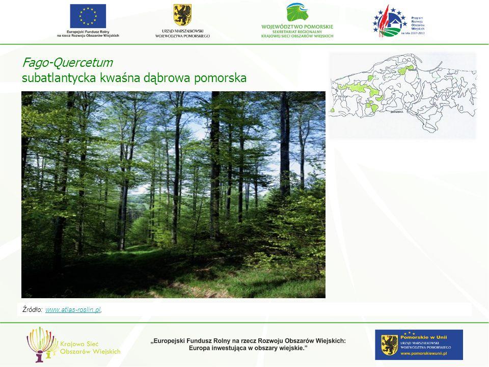 Fago-Quercetum subatlantycka kwaśna dąbrowa pomorska Źródło: www.atlas-roslin.pl,www.atlas-roslin.pl