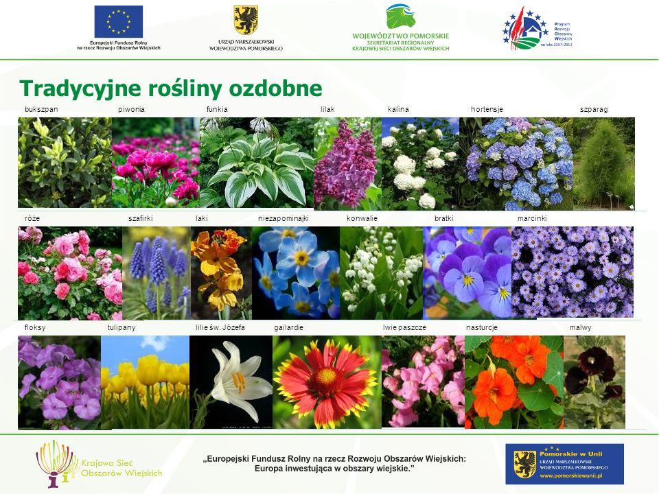 Tradycyjne rośliny ozdobne lilakkalinahortensjepiwoniafunkiabukszpan różeszafirkilakimarcinkiniezapominajkibratki tulipanylilie św. Józefanasturcjemal