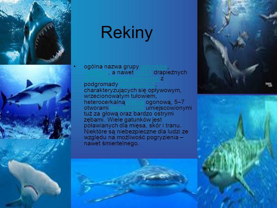 Rekiny ogólna nazwa grupy gatunków, rodzajów, a nawet rodzin drapieżnych ryb chrzęstnoszkieletowych z podgromady spodoustych, charakteryzujących się o
