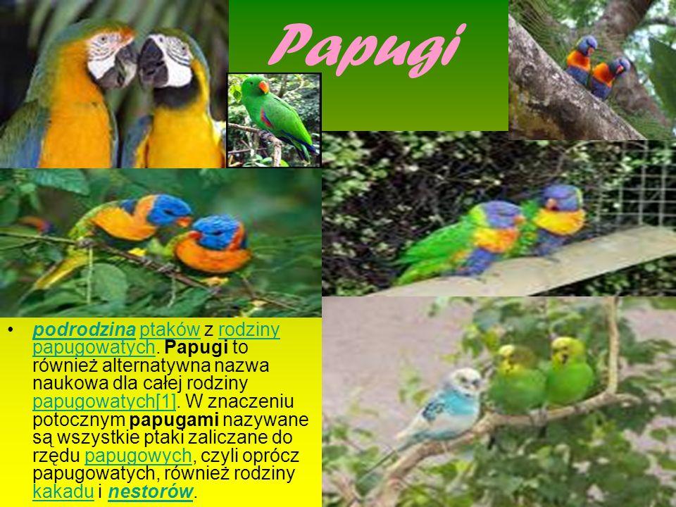 Papugi podrodzina ptaków z rodziny papugowatych. Papugi to również alternatywna nazwa naukowa dla całej rodziny papugowatych[1]. W znaczeniu potocznym