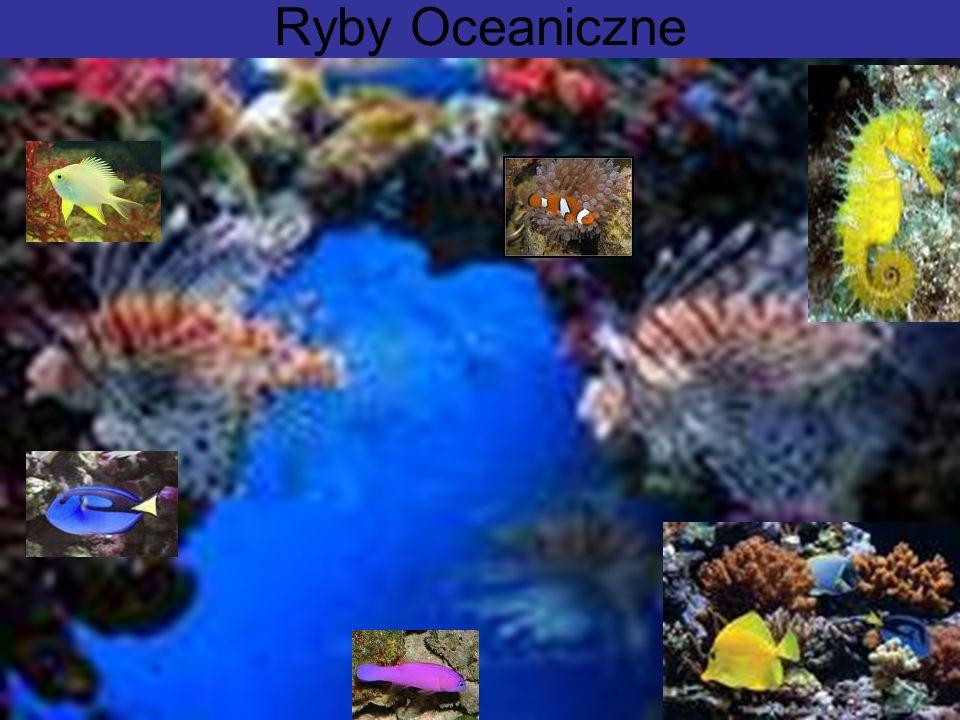 Ryby Oceaniczne
