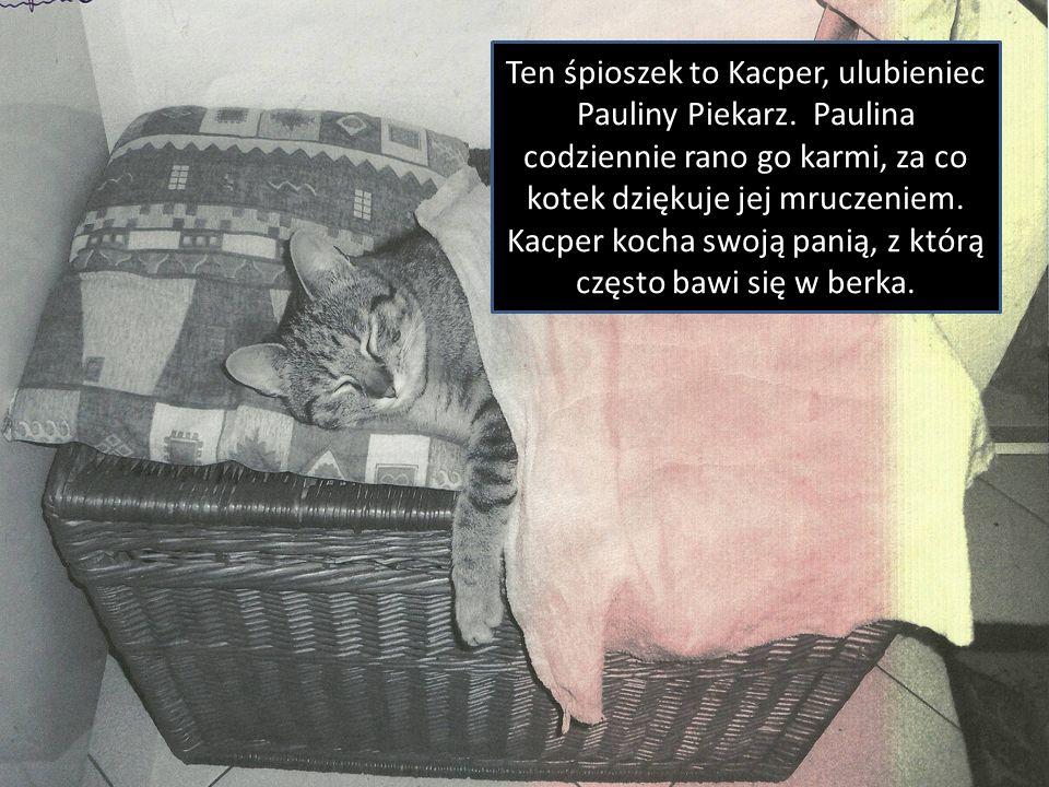 Ten śpioszek to Kacper, ulubieniec Pauliny Piekarz. Paulina codziennie rano go karmi, za co kotek dziękuje jej mruczeniem. Kacper kocha swoją panią, z