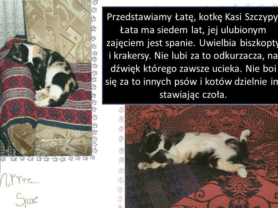 Przedstawiamy Łatę, kotkę Kasi Szczypy. Łata ma siedem lat, jej ulubionym zajęciem jest spanie. Uwielbia biszkopty i krakersy. Nie lubi za to odkurzac