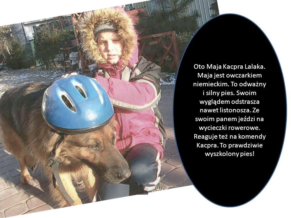Oto Maja Kacpra Lalaka. Maja jest owczarkiem niemieckim. To odważny i silny pies. Swoim wyglądem odstrasza nawet listonosza. Ze swoim panem jeździ na
