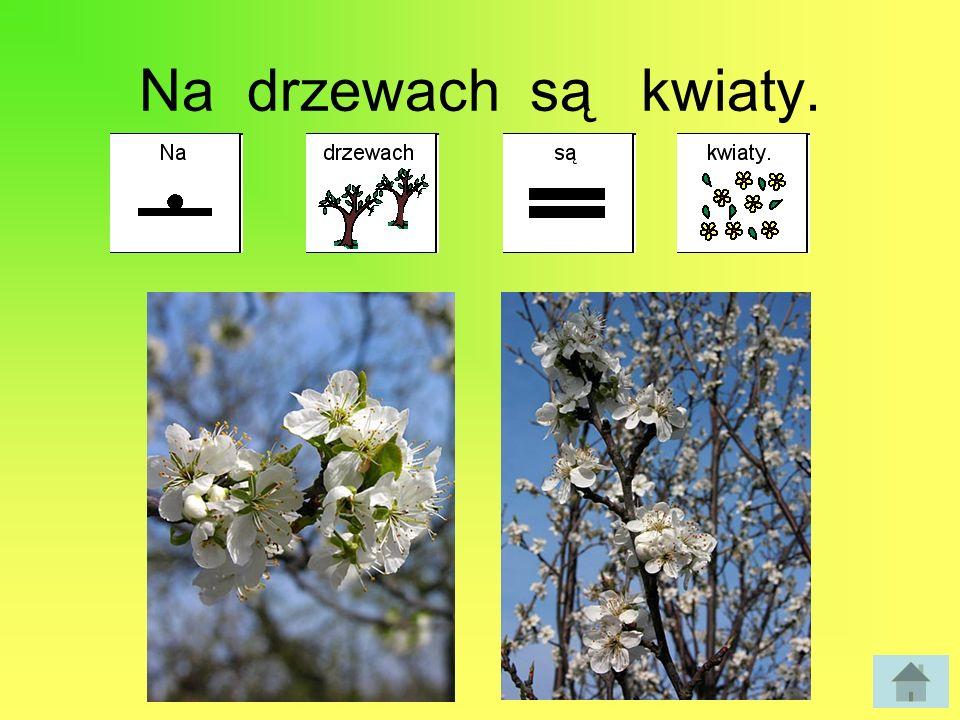 Na drzewach są kwiaty.
