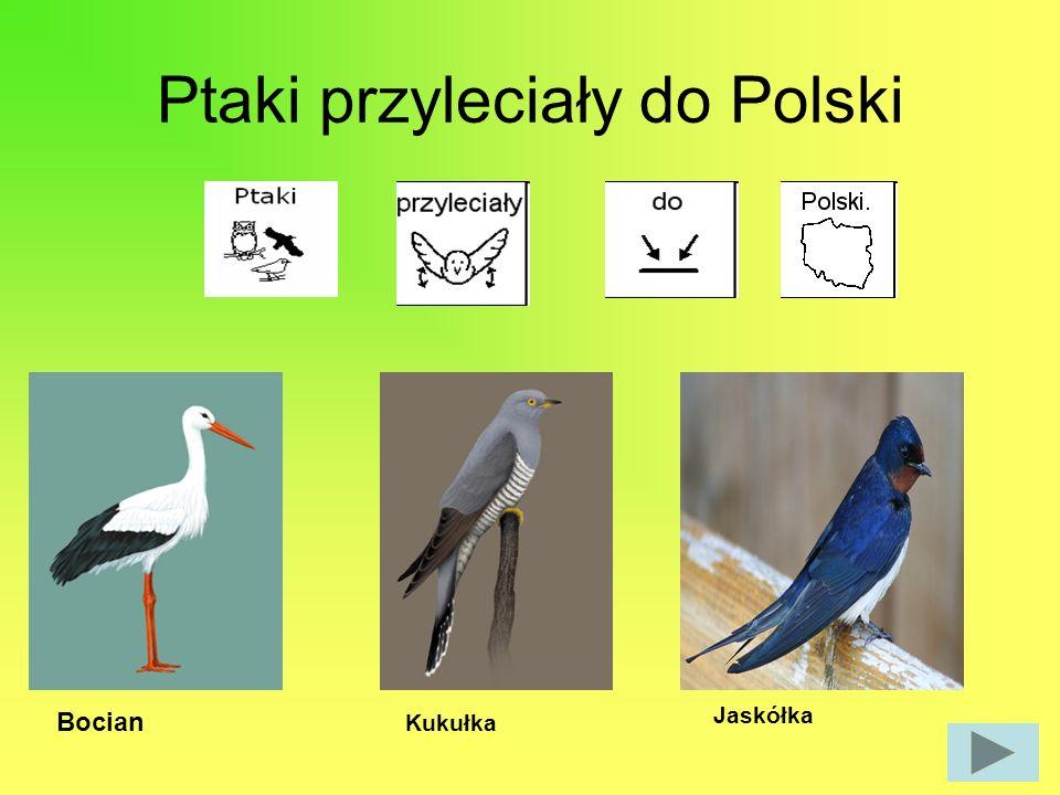Ptaki przyleciały do Polski Bocian Kukułka Jaskółka