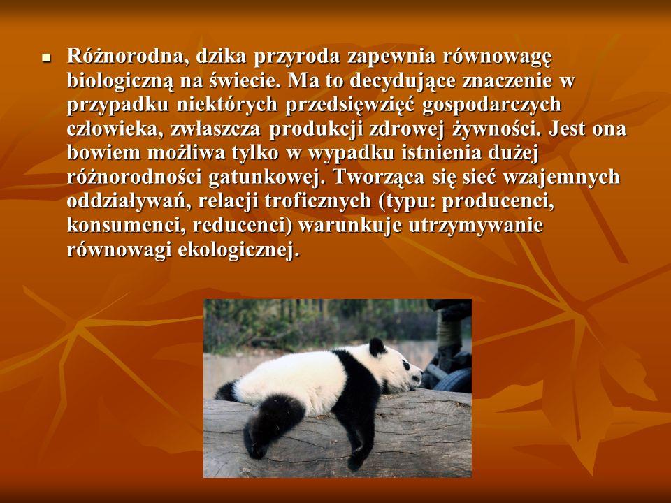 W ciągu ostatnich 400-500 lat w Polsce wyginęło 11-25 gatunków, m.