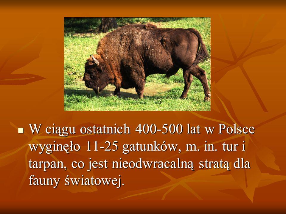W ciągu ostatnich 400-500 lat w Polsce wyginęło 11-25 gatunków, m. in. tur i tarpan, co jest nieodwracalną stratą dla fauny światowej. W ciągu ostatni