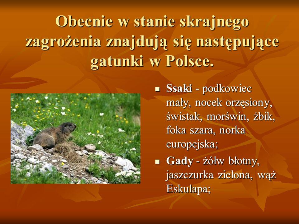 Obecnie w stanie skrajnego zagrożenia znajdują się następujące gatunki w Polsce. Ssaki - podkowiec mały, nocek orzęsiony, świstak, morświn, żbik, foka