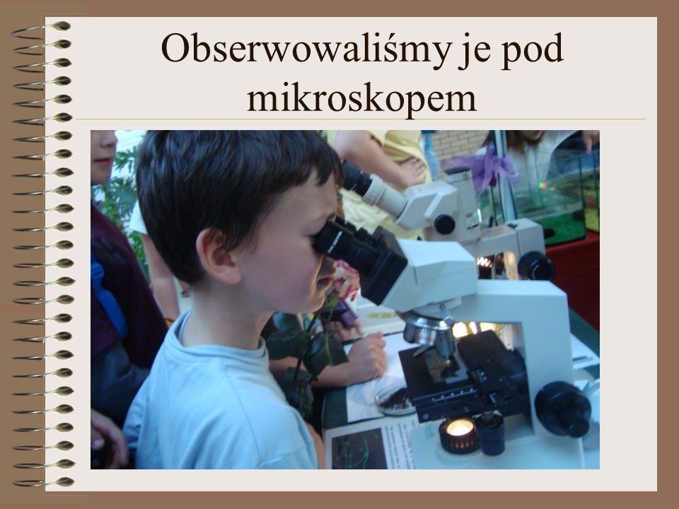 Obserwowaliśmy je pod mikroskopem