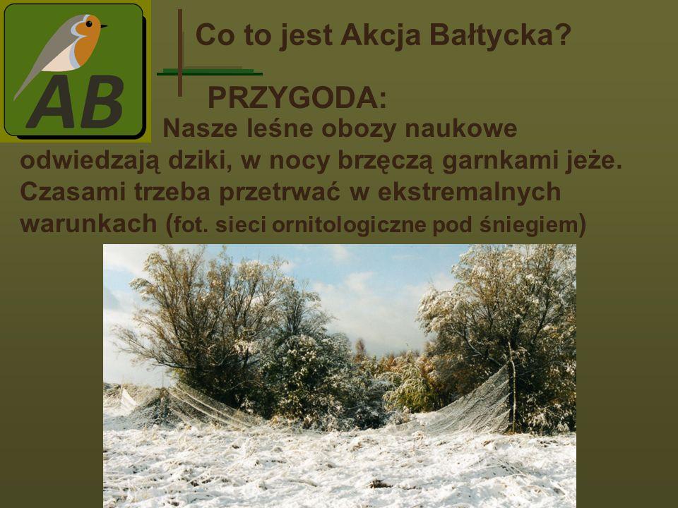 Co to jest Akcja Bałtycka.