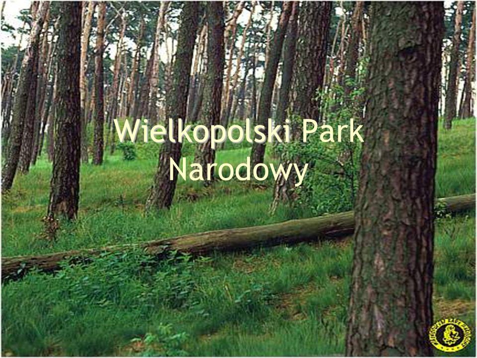 Wielkopolski Wielkopolski Park Narodowy