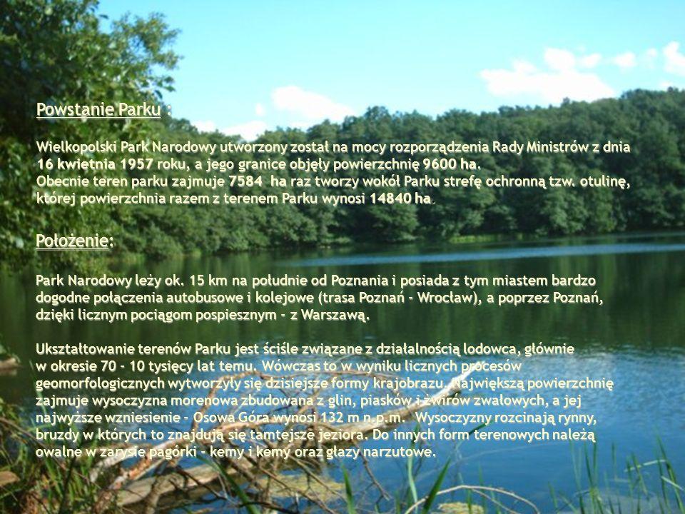 Powstanie Parku : Wielkopolski Park Narodowy utworzony został na mocy rozporządzenia Rady Ministrów z dnia 16 kwietnia 1957 roku, a jego granice objęł
