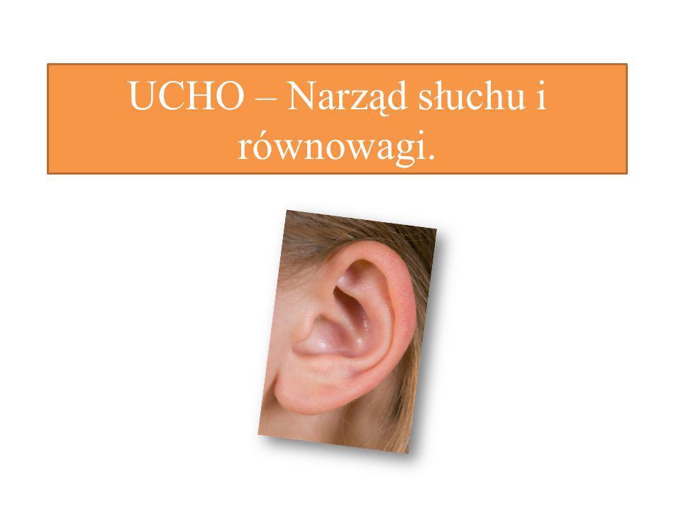 UCHO – Narząd słuchu i równowagi.