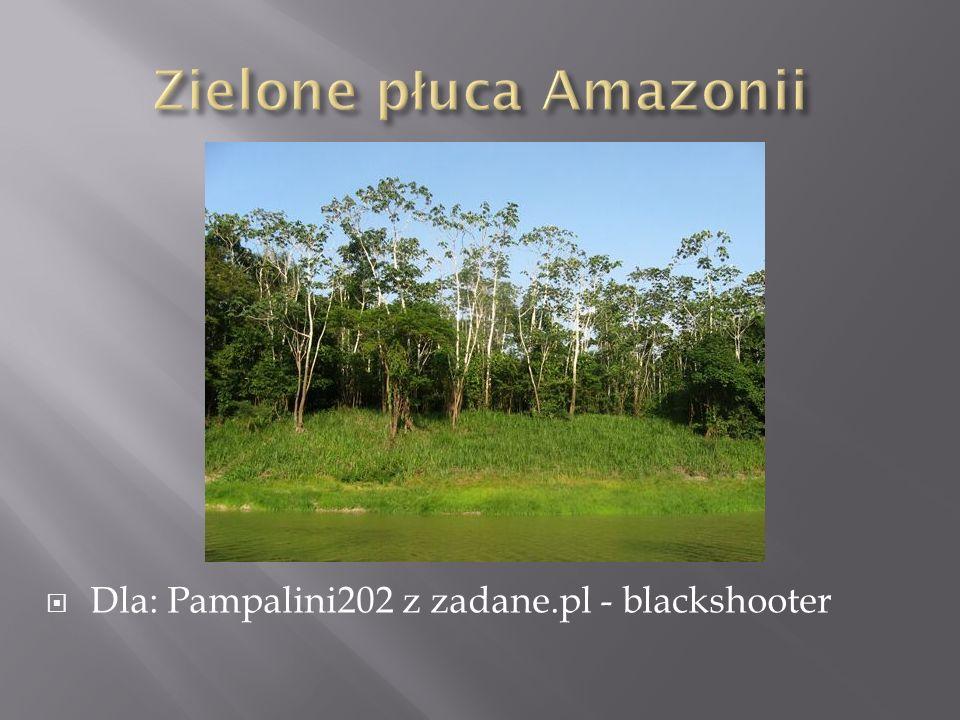 Dla: Pampalini202 z zadane.pl - blackshooter