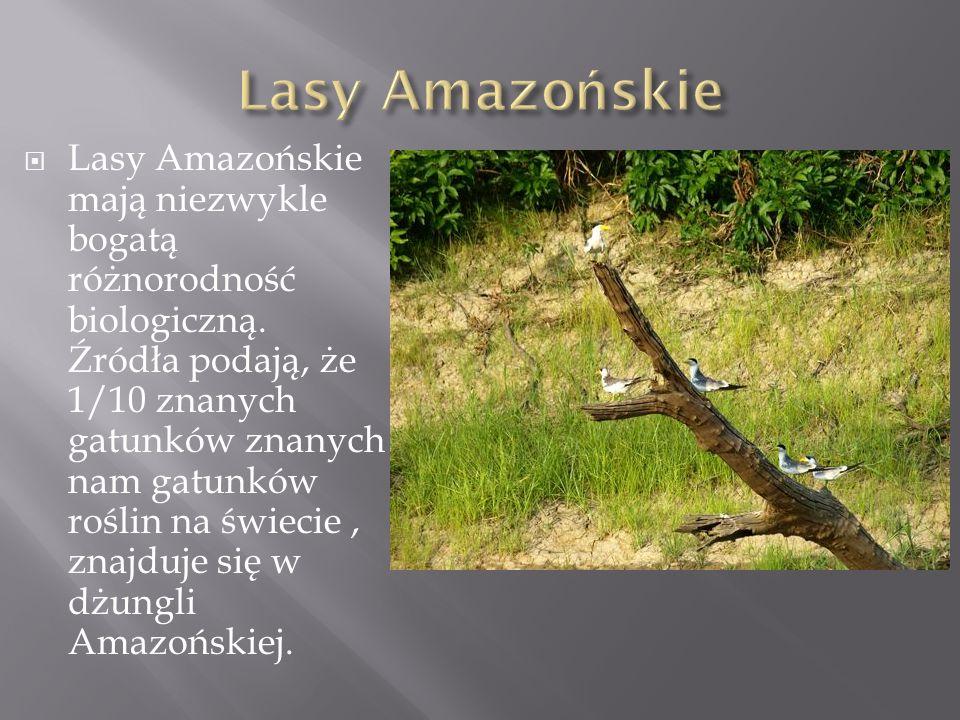 Lasy Amazońskie mają niezwykle bogatą różnorodność biologiczną. Źródła podają, że 1/10 znanych gatunków znanych nam gatunków roślin na świecie, znajdu
