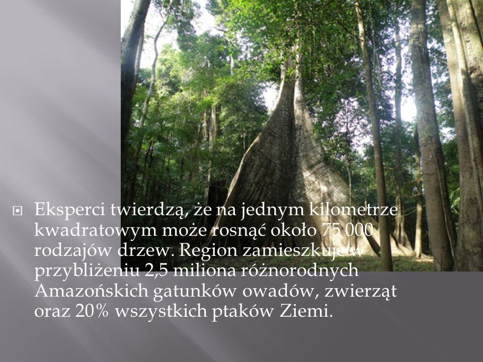 Eksperci twierdzą, że na jednym kilometrze kwadratowym może rosnąć około 75 000 rodzajów drzew. Region zamieszkuje w przybliżeniu 2,5 miliona różnorod