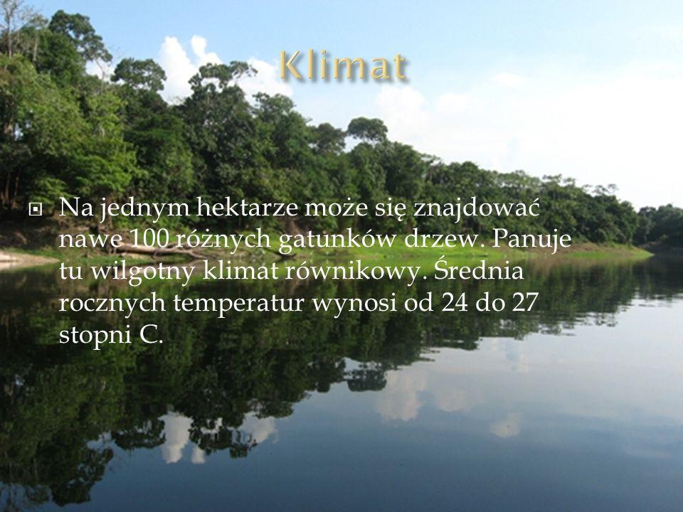 Na jednym hektarze może się znajdować nawe 100 różnych gatunków drzew. Panuje tu wilgotny klimat równikowy. Średnia rocznych temperatur wynosi od 24 d