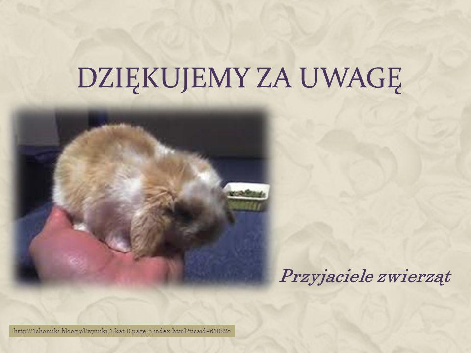 DZIĘKUJEMY ZA UWAGĘ Przyjaciele zwierząt http://1chomiki.bloog.pl/wyniki,1,kat,0,page,3,index.html?ticaid=61022c