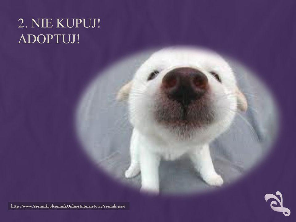 http://kotipies.duu.pl/pies-z-wizyta-u-weterynarza/ 3. STERYLIZUJ