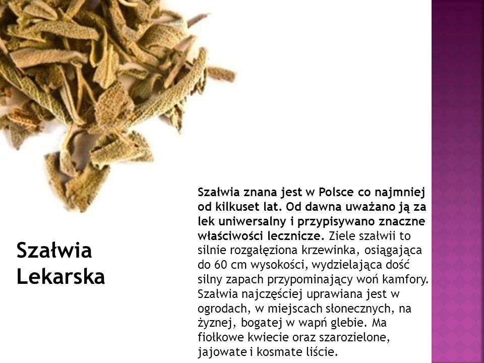 Szałwia znana jest w Polsce co najmniej od kilkuset lat. Od dawna uważano ją za lek uniwersalny i przypisywano znaczne właściwości lecznicze. Ziele sz