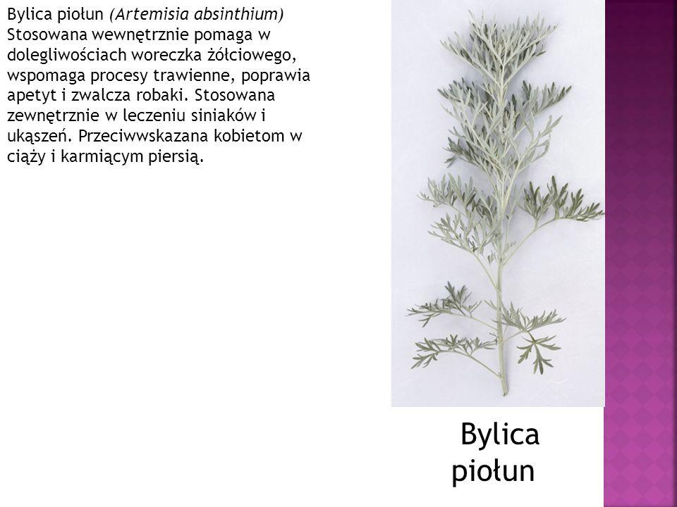 Bylica piołun (Artemisia absinthium) Stosowana wewnętrznie pomaga w dolegliwościach woreczka żółciowego, wspomaga procesy trawienne, poprawia apetyt i