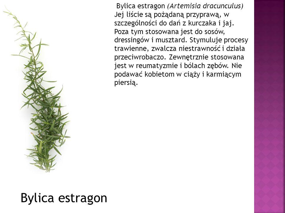 Bylica estragon (Artemisia dracunculus) Jej liście są pożądaną przyprawą, w szczególności do dań z kurczaka i jaj. Poza tym stosowana jest do sosów, d