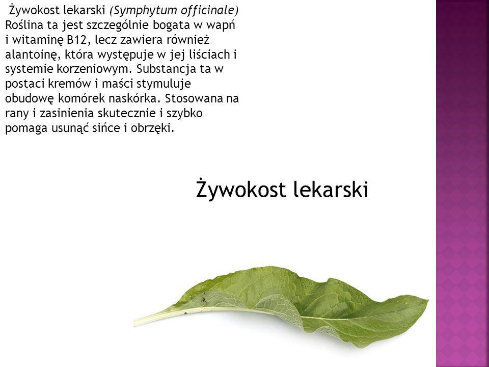 Żywokost lekarski (Symphytum officinale) Roślina ta jest szczególnie bogata w wapń i witaminę B12, lecz zawiera również alantoinę, która występuje w j