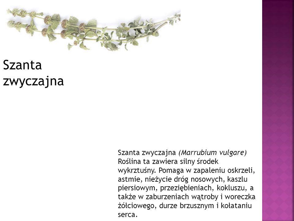 Szanta zwyczajna (Marrubium vulgare) Roślina ta zawiera silny środek wykrztuśny. Pomaga w zapaleniu oskrzeli, astmie, nieżycie dróg nosowych, kaszlu p
