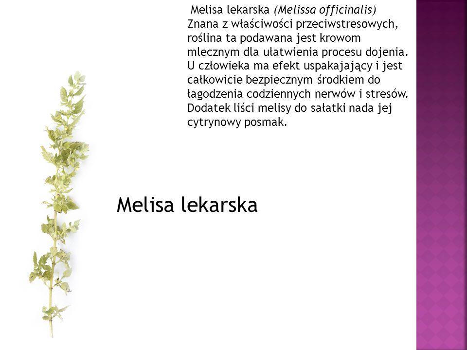 Melisa lekarska (Melissa officinalis) Znana z właściwości przeciwstresowych, roślina ta podawana jest krowom mlecznym dla ułatwienia procesu dojenia.