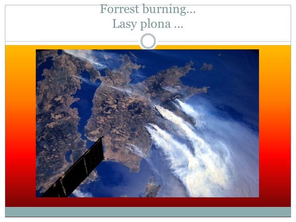 Forrest burning… Lasy plona …