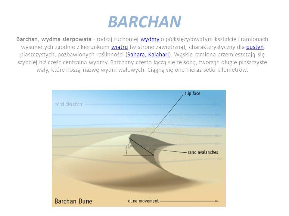 BARCHAN Barchan, wydma sierpowata - rodzaj ruchomej wydmy o półksiężycowatym kształcie i ramionach wysuniętych zgodnie z kierunkiem wiatru (w stronę zawietrzną), charakterystyczny dla pustyń piaszczystych, pozbawionych roślinności (Sahara, Kalahari).